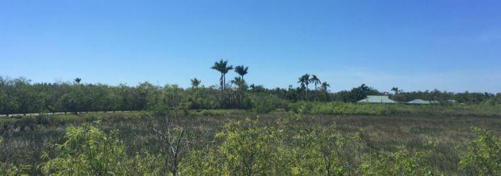 Everglades National Park + Biscayne National Park //Florida