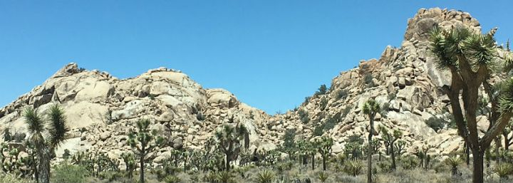 Joshua Tree National Park // California
