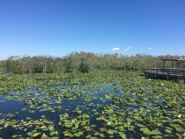 Everglades National Park